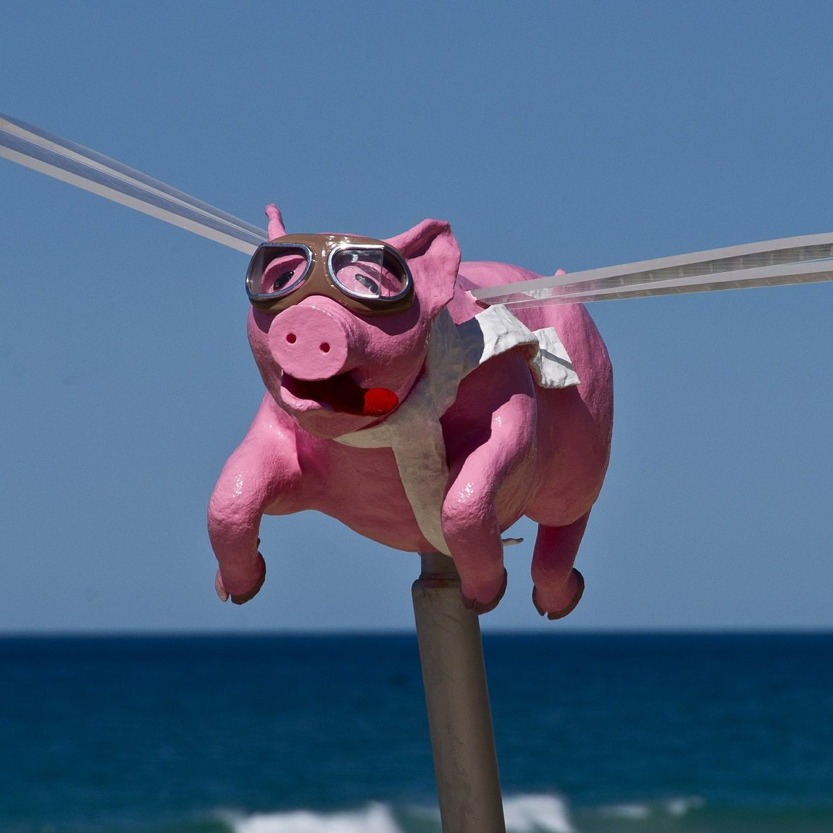 poorly executed flying pig